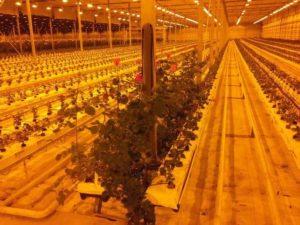 Проекты ТОО «Ecoculture Fields»